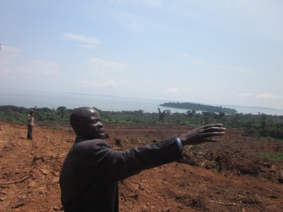 Land grabbing for palm oil in Uganda